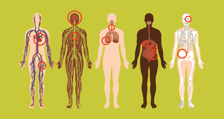 bodies with circles around the organs cigarettes harm